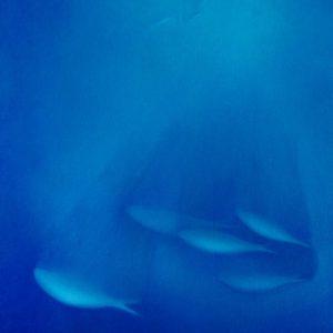 『ブルー』2011年 F10(53×45cm)